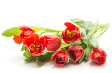 Seven red tulips bouquet spring flowers isolated on white background fresh cut and open  Stock Photo