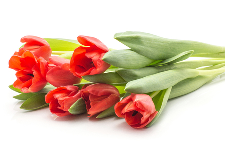 Seven red tulips bouquet spring flowers isolated on white background fresh cut
