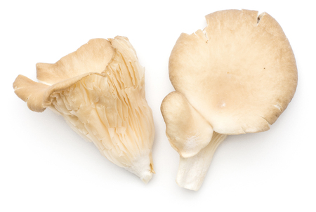 Oyster mushrooms (two fungus Pleurotus ostreatus top view) isolated on white background raw uncooked  Stock Photo
