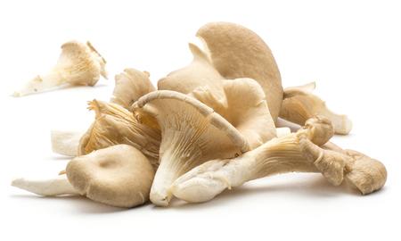 Oyster mushrooms (Pleurotus ostreatus fungus set) isolated on white background raw uncooked  Stock Photo