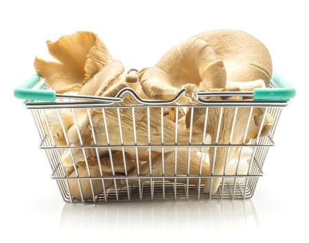 Oyster mushrooms (Pleurotus ostreatus fungus) in a shopping basket isolated on white background raw uncooked  Stock Photo