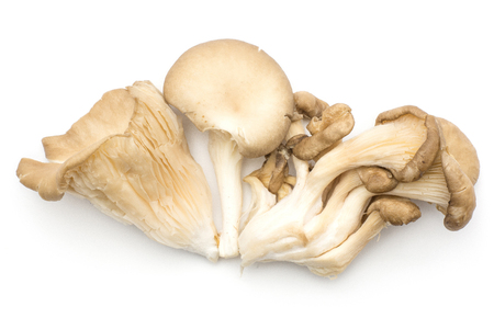 Oyster mushrooms compare (fungus Pleurotus ostreatus varieties top view) isolated on white background raw uncooked
