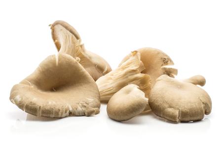 Oyster mushrooms (Pleurotus ostreatus stack) isolated on white background raw uncooked Stock Photo