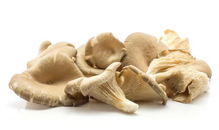 Oyster mushrooms (Pleurotus ostreatus set) isolated on white background raw uncooked
