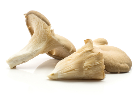 Oyster mushrooms (Pleurotus ostreatus three varieties compare) isolated on white background raw uncooked