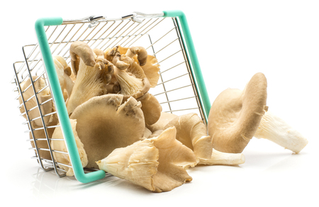 Oyster mushrooms (Pleurotus ostreatus fungus) out a shopping basket isolated on white background raw uncooked Stock Photo