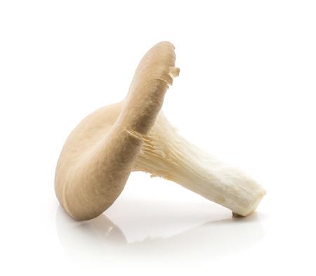 Oyster mushroom (Pleurotus ostreatus) isolated on white background raw fresh