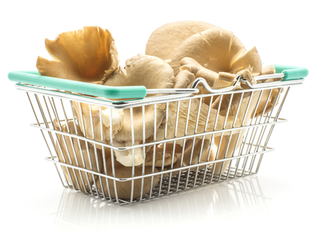 Oyster mushrooms (Pleurotus ostreatus fungus) in a shopping basket isolated on white background raw