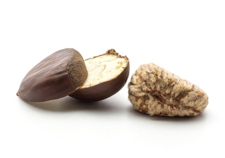 One sliced European chestnut and one peel Spanish edible isolated on white background raw fresh brown nuts