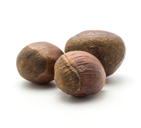 Three European chestnuts Spanish edible isolated on white background raw fresh brown nuts
