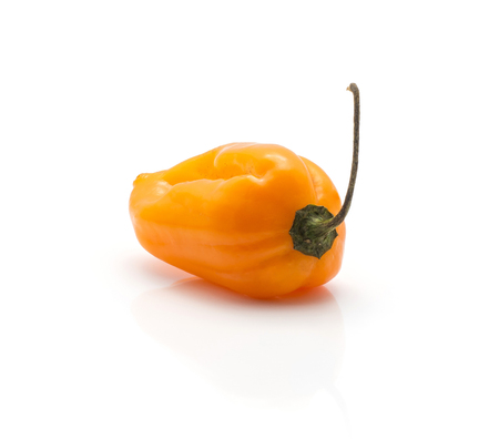 One Habanero chili deep orange hot pepper isolated on white background  Stock Photo