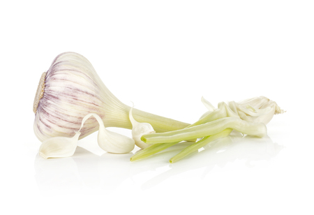 Young garlic fresh bulb with cloves and green stems isolated on white background  스톡 콘텐츠