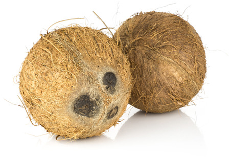Two coconuts isolated on white background brown fibrous shell