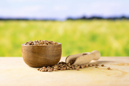 Lot of whole raw green lentil seeds in a wooden bowl and scoop with wheat field in background Stok Fotoğraf