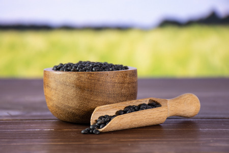 Lot of whole raw black lentils beluga variety with wooden scoop with green wheat field