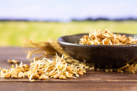 Lot of whole raw fresh yellow lentil sprouts on jute cloth in a grey ceramic bowl with green wheat field in background