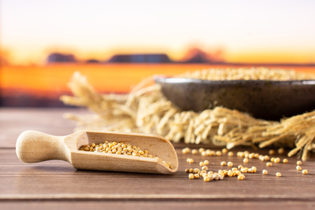 Lot of whole white mustard seeds with wooden scoop on grey ceramic plate on jute cloth with autumn field and sunset in background