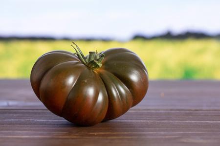 One whole fresh tomato primora with green wheat field Stock Photo