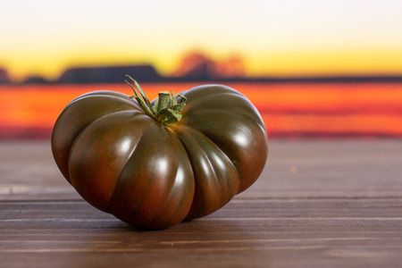 One whole fresh tomato primora with autumn field in background