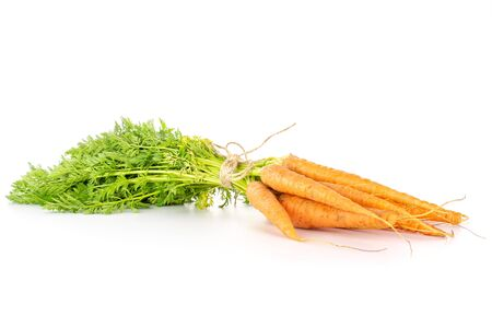 Lot of whole fresh orange carrot with greens tied by jute isolated on white background