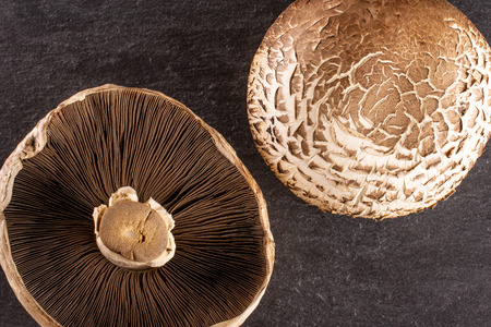 Group of two whole fresh brown mushroom portobello ventral view flatlay on grey stone