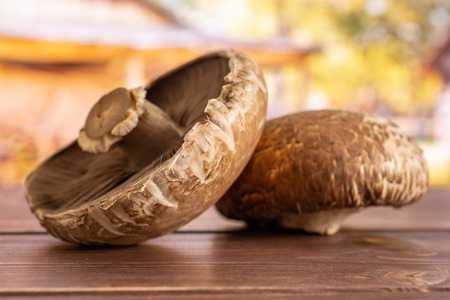 Group of two whole fresh brown mushroom portobello in a yard Stock Photo