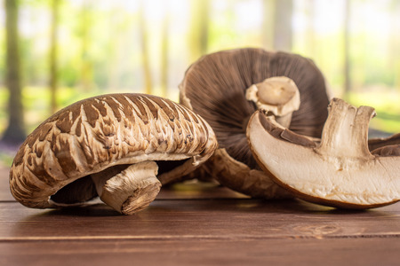 Group of two whole one half of fresh brown mushroom portobello in a forest Stock Photo