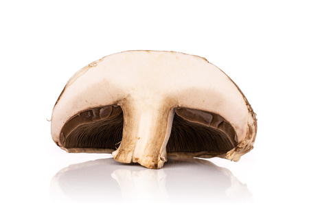 One half of meaty fresh brown mushroom portobello isolated on white background Stock Photo