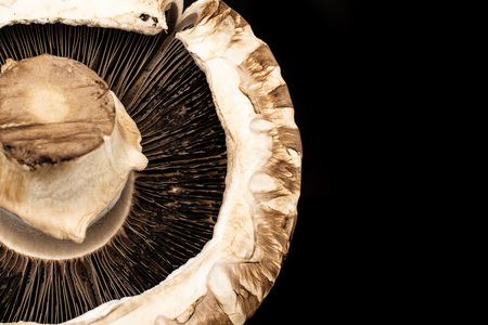 Closeup of one whole fresh brown mushroom portobello ventral view isolated on black glass Stock Photo