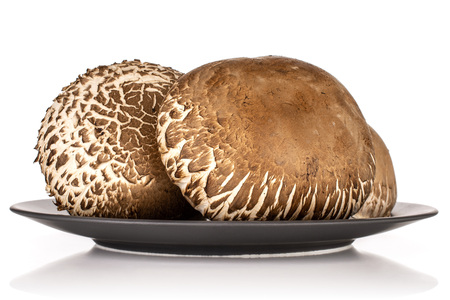 Group of three whole fresh brown mushroom portobello on grey ceramic plate isolated on white background
