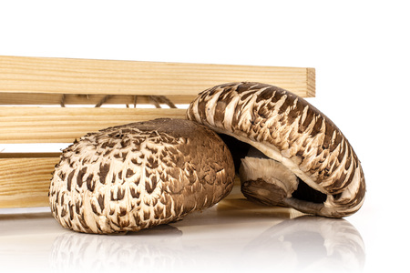 Group of two whole fresh brown mushroom portobello with wooden crate isolated on white background Stock Photo