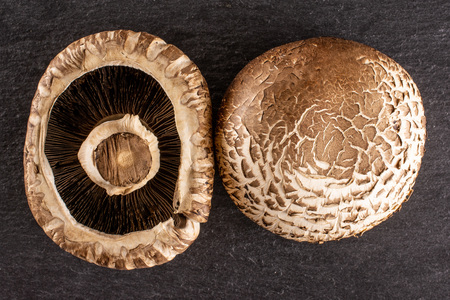 Group of two whole raw fresh brown mushroom portobello ventral view flatlay on grey stone