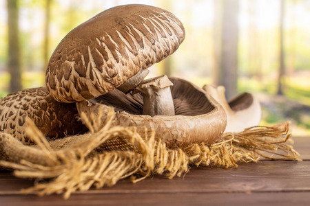 Group of three whole one half of fresh brown mushroom portobello on jute cloth in a forest