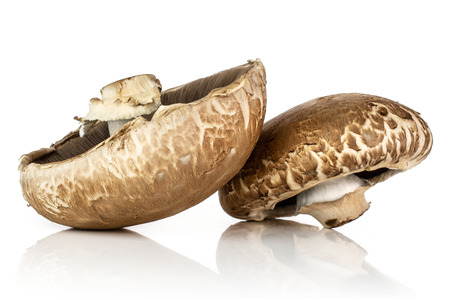 Group of two whole fresh brown mushroom portobello isolated on white background