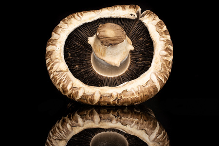 One whole fresh brown mushroom portobello ventral view isolated on black glass Stock Photo