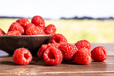 Lot of whole fresh red raspberry stack on grey ceramic plate with green wheat field Фото со стока