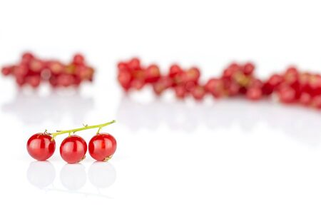 Lot of whole fresh red currant front focus isolated on white background