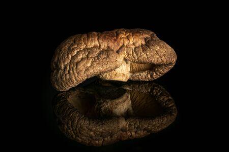 One whole dry mushroom shiitake isolated on black glass
