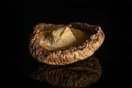 One whole dry mushroom shiitake closeup isolated on black glass