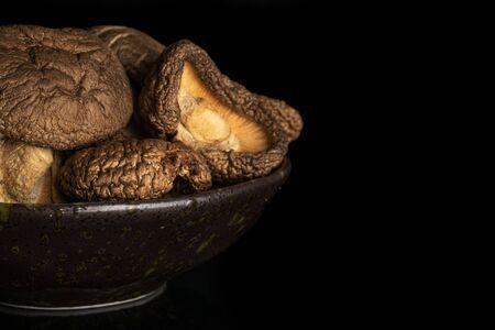 Closeup of lot of whole dry mushroom shiitake on grey ceramic plate isolated on black glass Reklamní fotografie