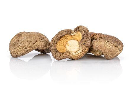 Group of three whole raw dry mushroom shiitake isolated on white background Reklamní fotografie