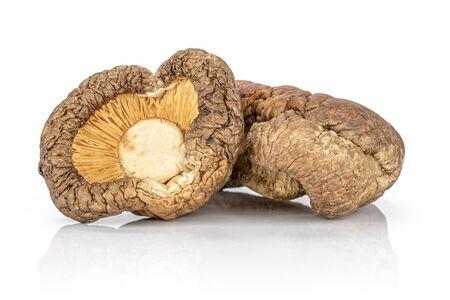Group of two whole raw dry mushroom shiitake isolated on white background Reklamní fotografie