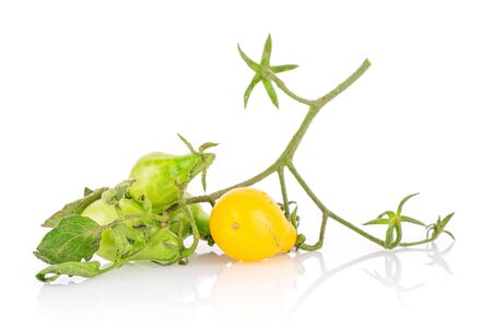 Group of three whole fresh yellow pear tomato on branch isolated on white background 写真素材