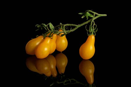 Group of five whole fresh yellow pear tomato isolated on black glass