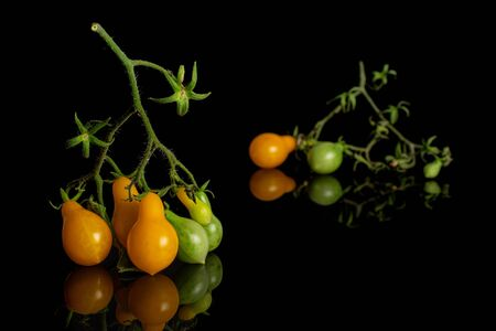 Group of seven whole fresh yellow pear tomato isolated on black glass