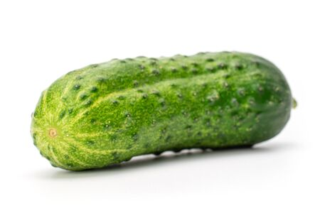 One whole fresh pickling cucumber isolated on white background