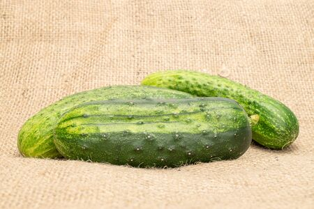 Group of three whole fresh green pickling cucumber on jute cloth 스톡 콘텐츠