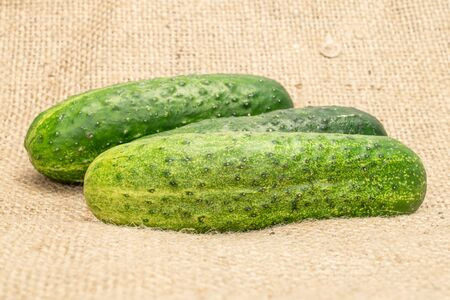 Group of three whole fresh green pickling cucumber on jute cloth