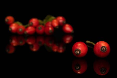 Lot of whole bright fresh red rosehip front focus isolated on black glass