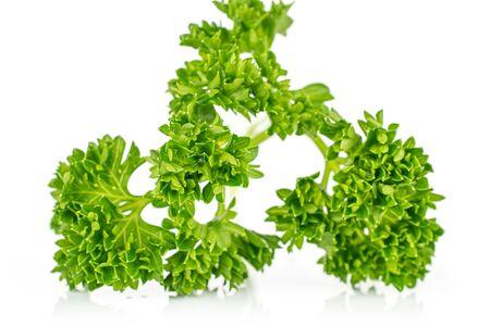 One whole fresh green parsley isolated on white background